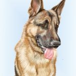 dog-caricature